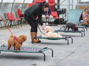 hortondogs group class dog training session in old moat garden centre epsom