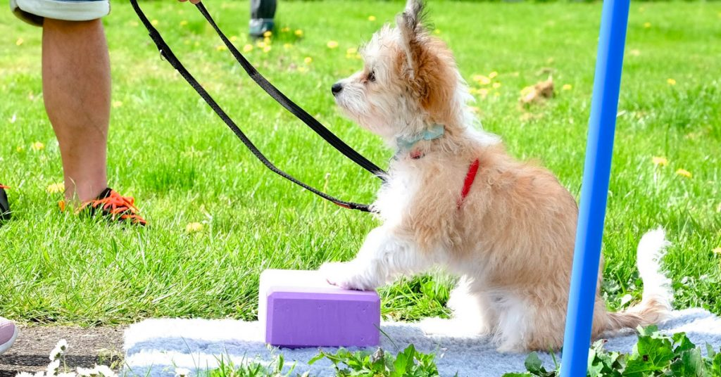 website june dog training classes cover