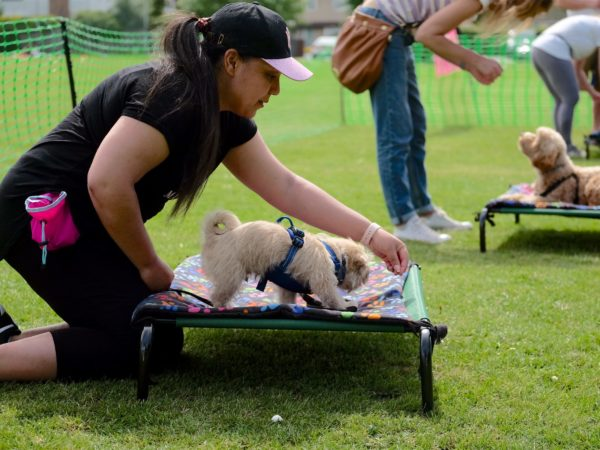 puppy training classes in Epsom with boundary games