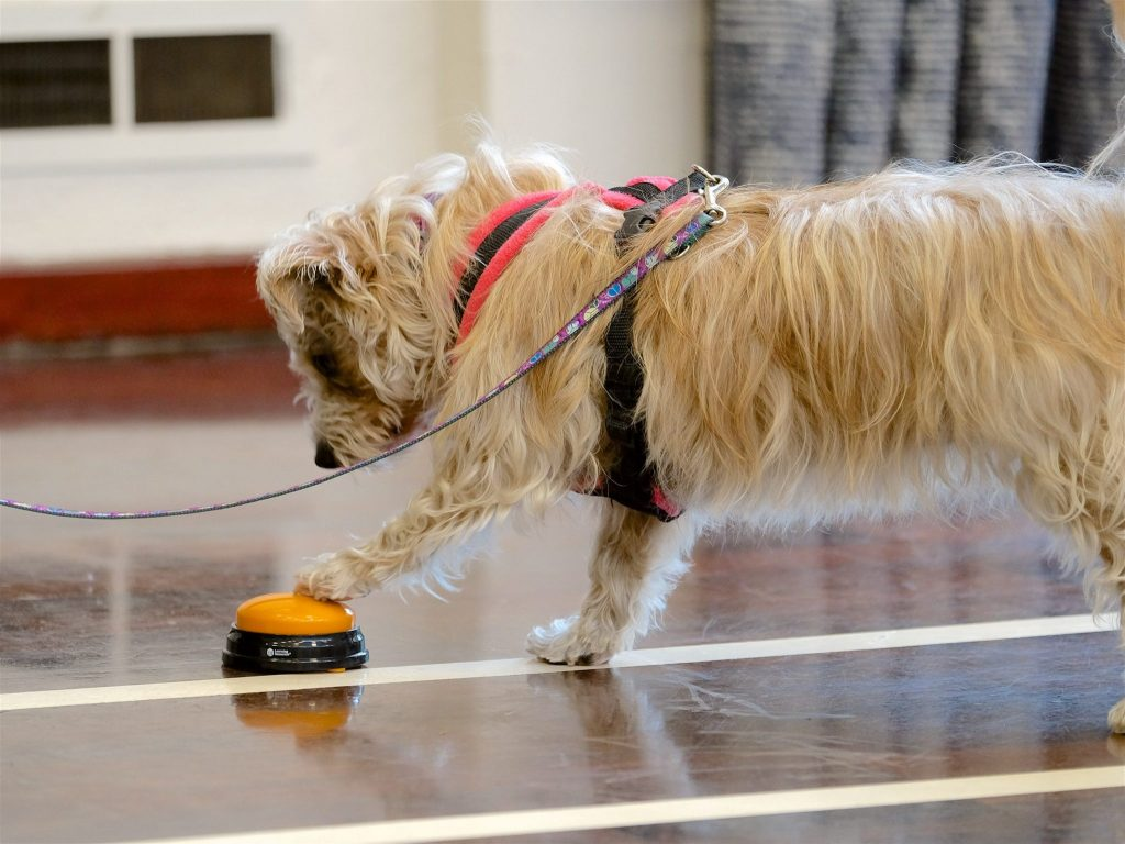 white dog pressing bell in confidence boost workshop