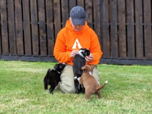 cathy with three border collie puppies 2