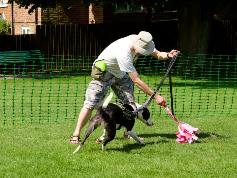 dog playing with pink mop toy in training class 2