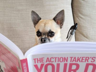 pixel the chihuahua studying book