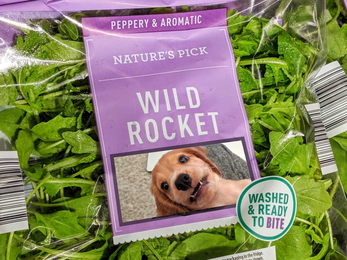 Wild Rocket Cover Image