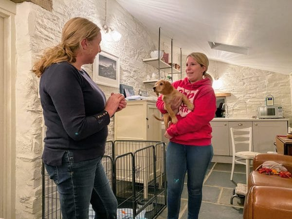 puppy cocker spaniel meeting socialising new lady