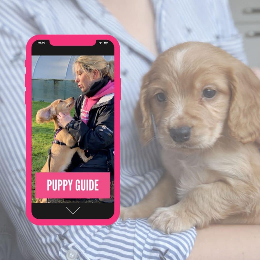 horton dogs puppy guide cover square 1 1