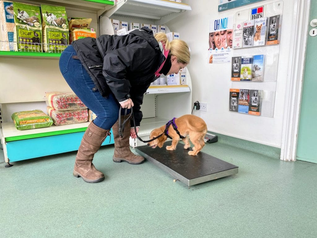 Cathy and Rocket on vets scales