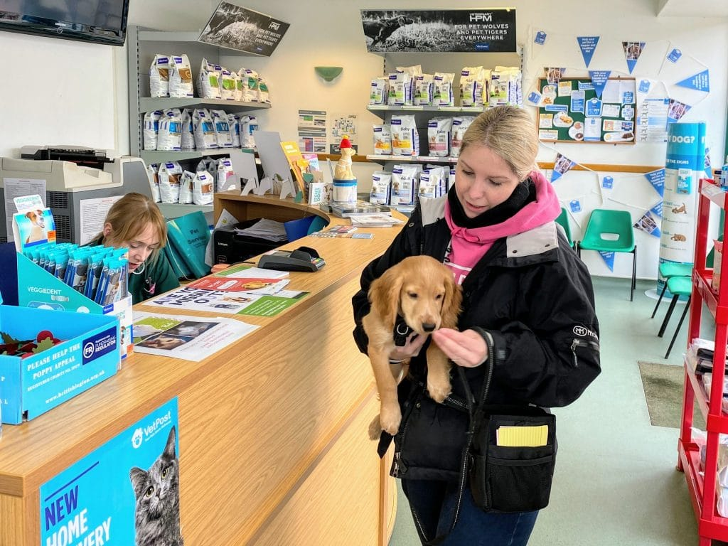 Cathy and Rocket golden cocker spaniel puppy at reception chessington vets