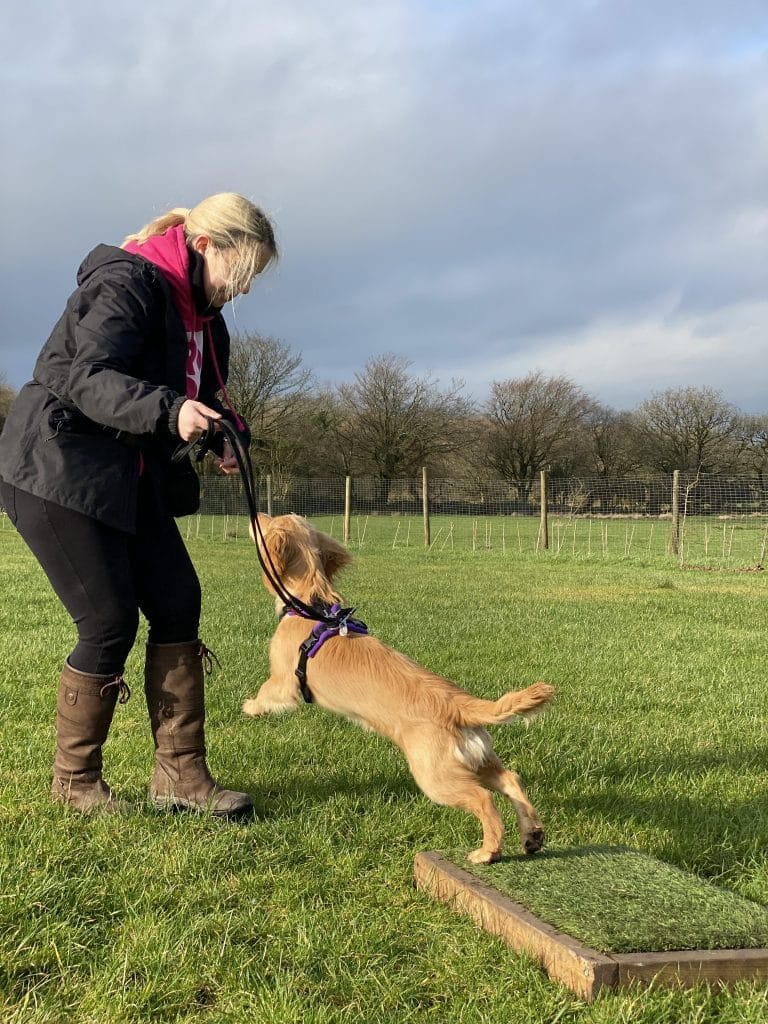 Cathy and Rocket place board training in gundog workshop