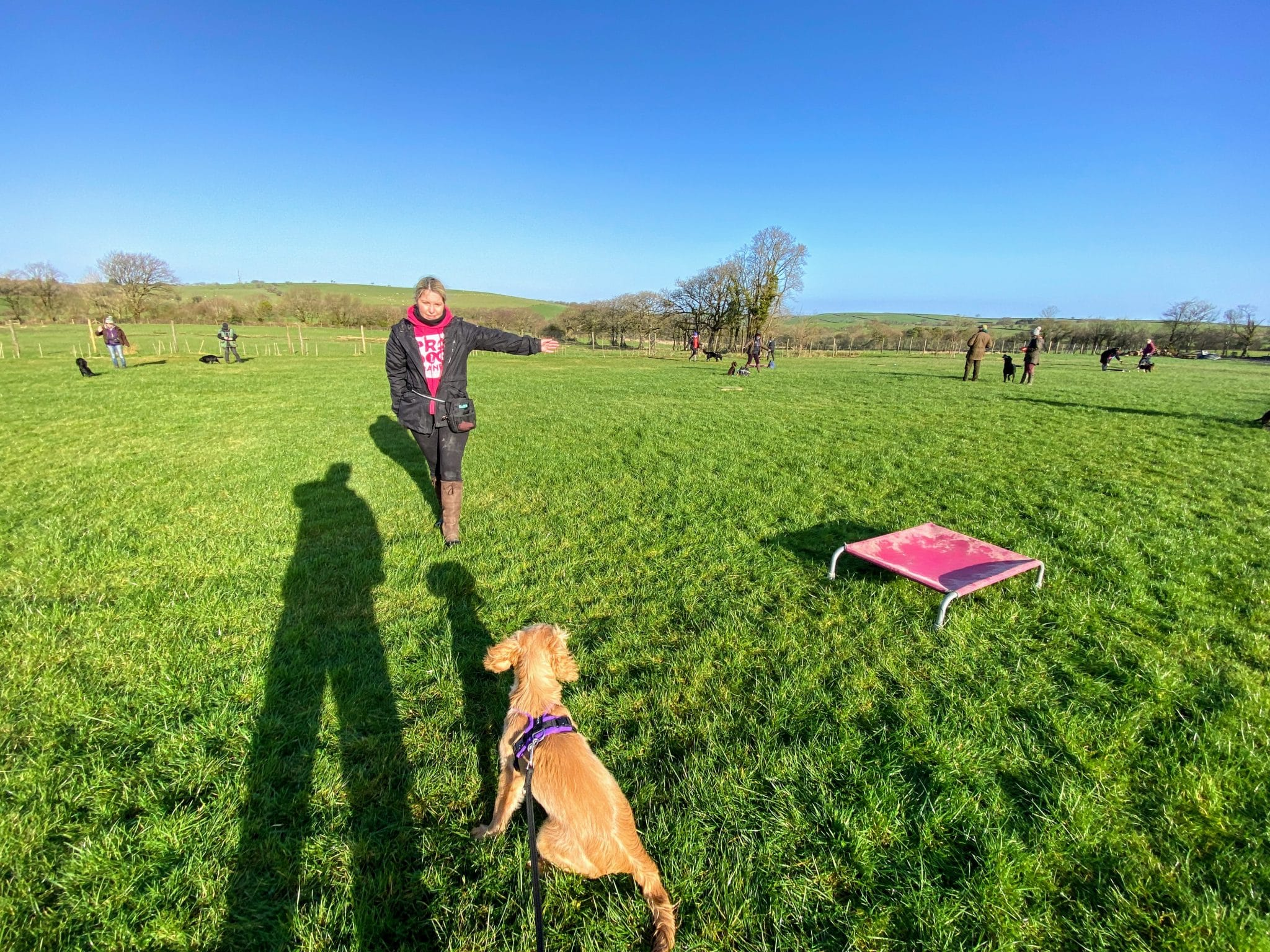 Cathy and Rocket at gundog training workshop in Devon