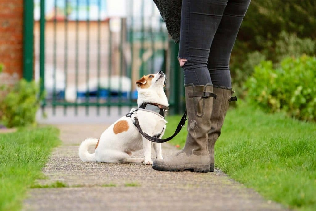 dog being close to owner on pathway