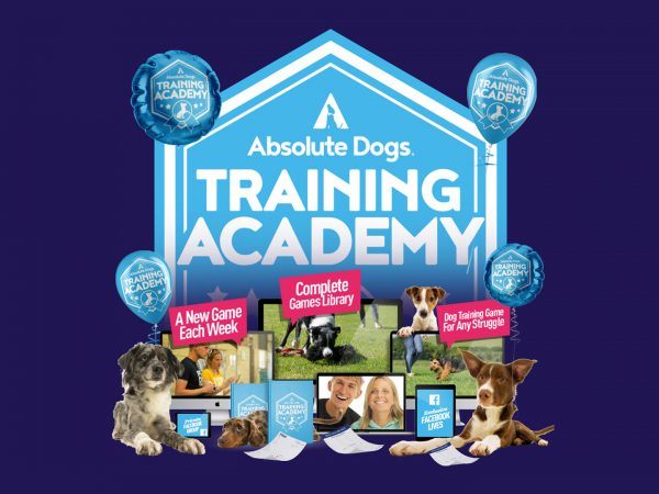 absolute dogs training academy 1