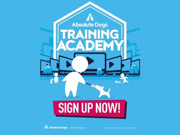 absolute dogs training academy 4