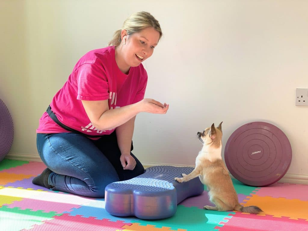 cathy dog training with pixel chihuahua on fitbone