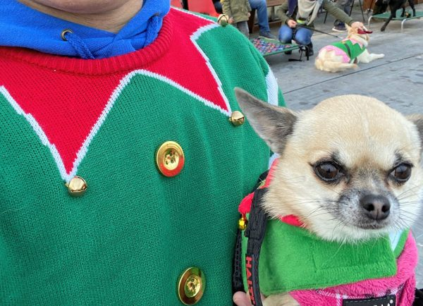 christmas dog training workshop 2019 with pixel chihuahua in elf