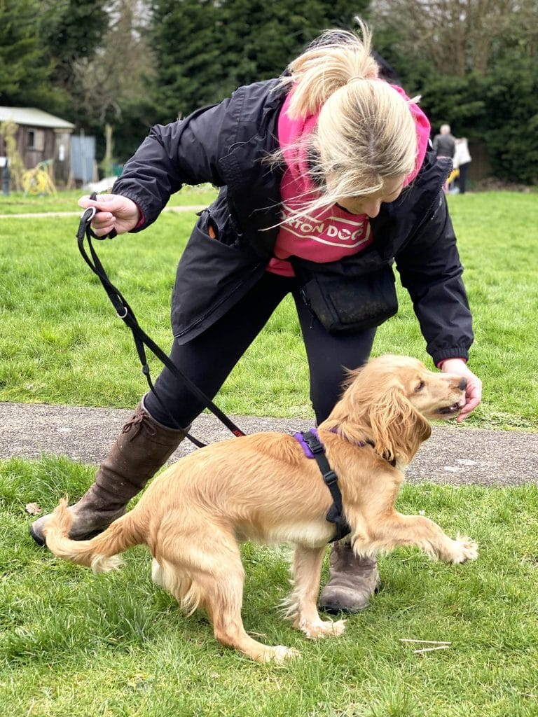 Cathy pro dog trainer playing fun games based training with Rocket spaniel
