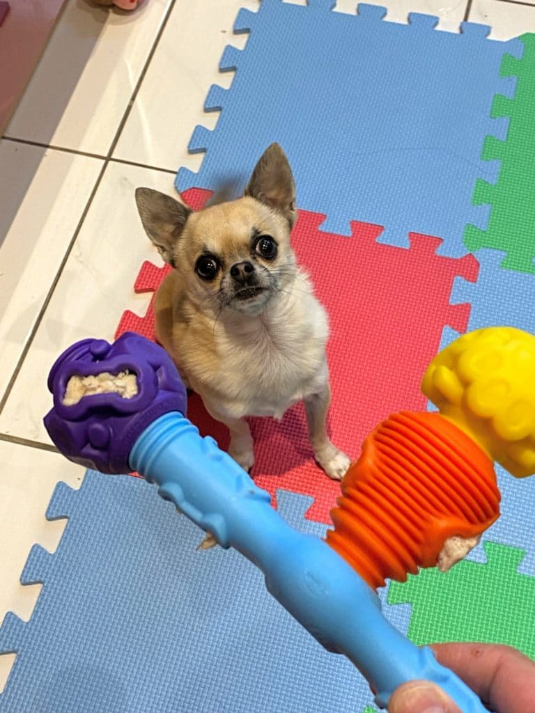Pixel chihuahua with small K9 connectables