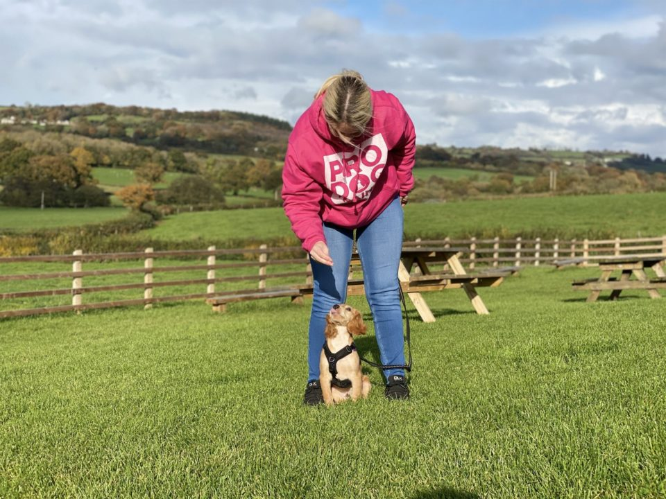 cathy and rocket cocker spaniel playing middle training game