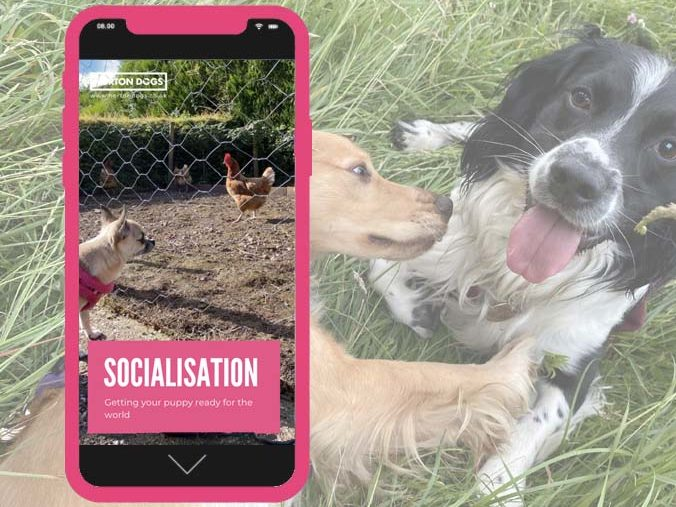 socialisation ebook image e1606585485933