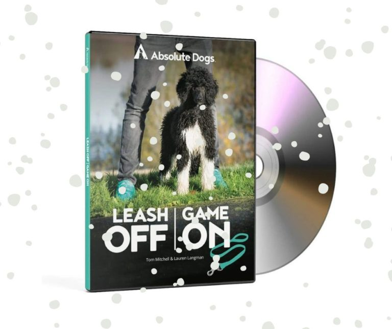christmas gift ideas for dogs with absolute dogs dvd