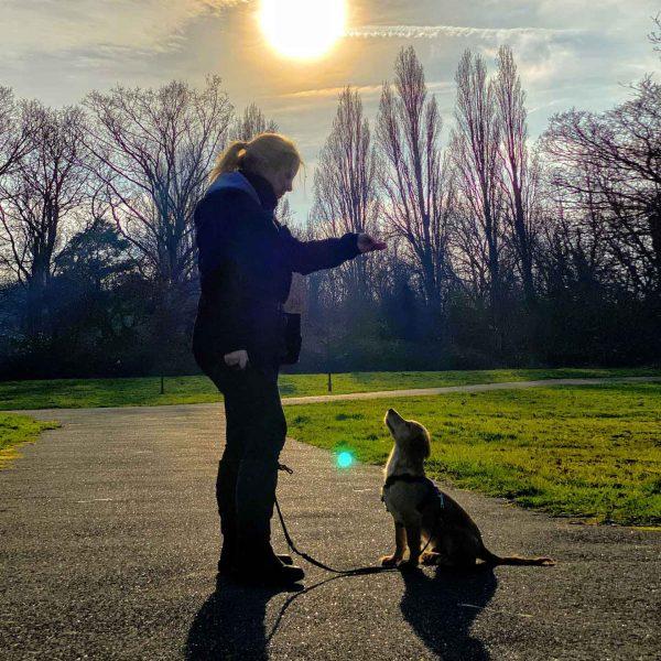 cathy rocket dog training in the epsom park
